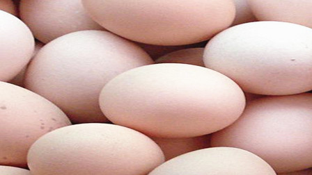 鸡蛋是买白皮的好还是买红皮的好?答案出人意料!赶快告诉家人!