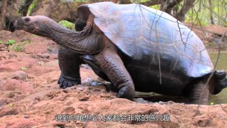 25年乌龟突然死亡,打开肚子吓一跳,全是值钱宝贝