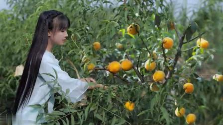 李子柒:黄桃罐头,炎炎夏日,来罐冰镇黄桃罐头怎么样?