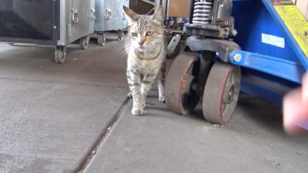 救援在工厂内的流浪猫一家,猫妈很警惕对人吼叫:离我孩子远点!