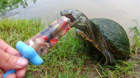 牛人自制小鱼冰棍,拿给乌龟吃却一点也不挑食,像极了吃货的我们