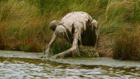 女子散步在河边发现奇怪生物走近一看不淡定了