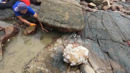 渔夫礁石附近赶海,感觉岩石里面有大货,伸手一摸这手臂废了