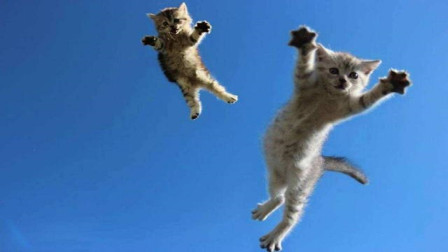 猫真的有九条命?科学家将150只猫从高处丢下,答案真出人意料