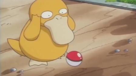 神奇宝贝:可达鸭是这样被收服的,缘分是来了,但是小霞一万个不愿意