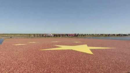 亚洲最大蔓越莓种植基地丰收,水上拼出巨型国旗