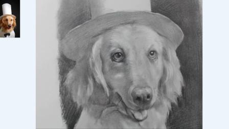 素描动物创意画,大暖男的金毛,配合上绅士的礼帽!您慢慢品!