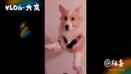 你想不想摸一摸我的基宝? 遛狗vlog