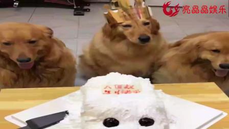 妞妞要与贝尔大欢分享生日蛋糕,网友纷纷送上祝福,太懂事了!