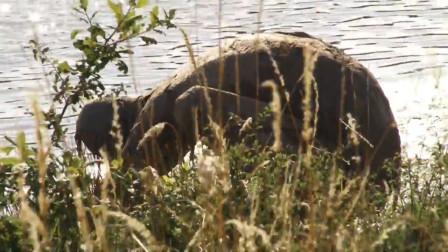 女子在河边散步发现一只怪物趴着喝水吓得赶紧打电话报警