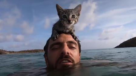 小哥在墙里发现一只宝藏小奶猫,黏人还会游泳,简直是狗子附体
