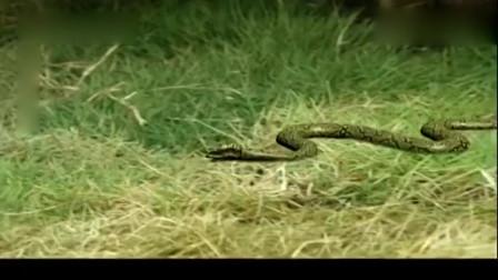 白蛇后传:小树精贪玩惹怒青蛇,龙井树精被咬伤哇哇大叫青蛇离去
