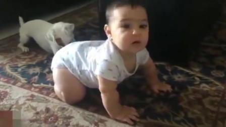 汪星人当老师教小宝宝爬行,小萌娃学习爬行的样子,可爱萌翻了