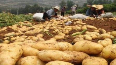中国要在沙漠上种土豆,外国人打死丢不信,最后中国网友:打脸不