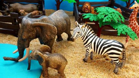 认识生活在非洲草原上的小动物