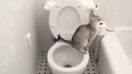 养只有洁癖的喵星啥体验自从猫咪学会蹲马桶铲屎官后悔死了