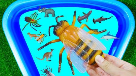 认识动物 蝗虫瓢虫蜜蜂