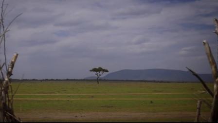 智慧之树顶级创意肯尼亚旅行时光