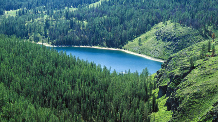 如果地球上的森林全部消失,会对地球产生什么影响?