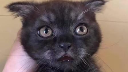 可爱的猫的眼神