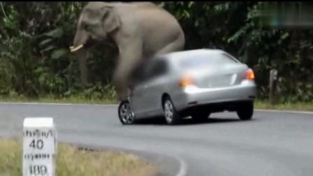 男子开车在公路上行驶 ,竟敢惹野生大象,接下来一幕让他欲诉无门
