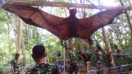 """男子在森林里疑似抓到""""翼龙"""",专家鉴定后,却让赶快放生!"""