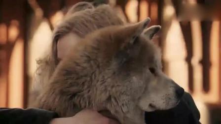 忠犬八公全剧最大泪点, 没有几个人能忍住