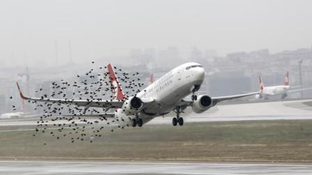 鸟群威力这么大,与高速飞行的飞机相撞,居然把飞机撞出大坑!