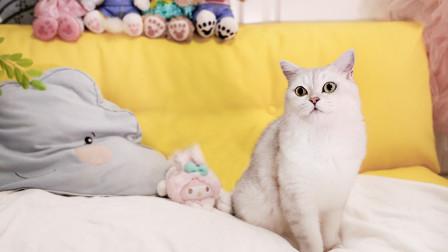 铲屎官打造猫咪民宿骗朋友入住,以为开心撸猫,结果哭着铲屎