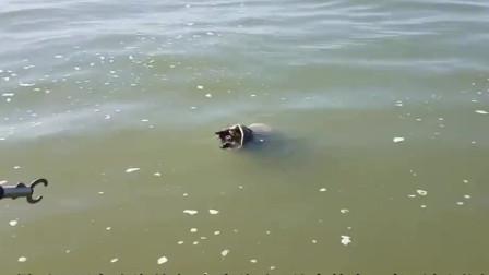 大鱼咬住鸟儿要把它拖入水中,眼看就要得逞,男子果断出手