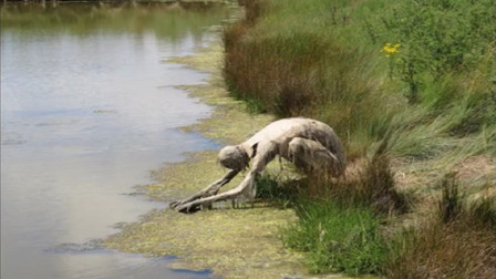 女子在河边散步发现一只怪物在喝水镜头记录全过程