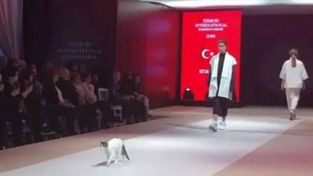 """为何在T台上走的台步,被称为""""猫步""""?维密超模亲自示范"""
