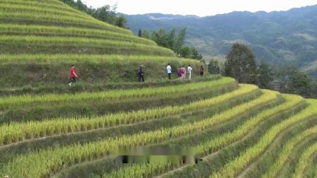 2019桂林——龙脊梯田