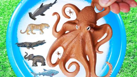 宝宝认识海洋动物 野生动物