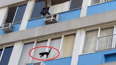 猫不会被摔死?老外用130只猫实验,镜头实拍全过程