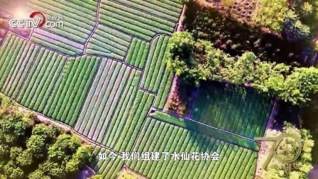 """[70年70城]记住漳州! 在这里, 被称为""""中国水仙花之乡"""""""