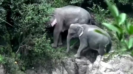 心痛!小象从瀑布滑落不幸死亡,5头大象为救它也全部……