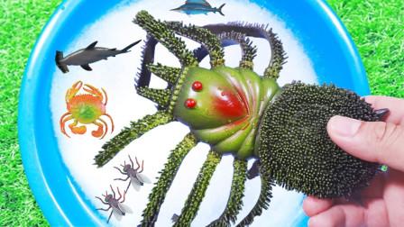 认识动物 蜘蛛海龟鳄鱼等野生海洋动物