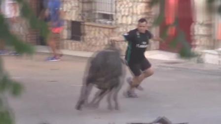 街头斗牛现场,快来看看哪位才是斗牛高手 不可错过的大戏