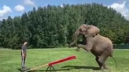 外国男子站在跷跷板这头,一头大象冲了过来,抬腿一按男子上天了!