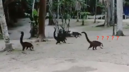 奇怪动物视频引网友猜测,都没想到是这个小动物,原来不是动画!