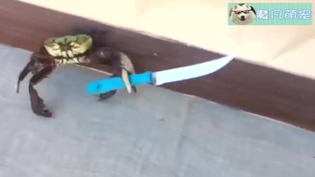 本来就横行霸道的螃蟹再加上刀了这谁敢惹大哥你赢了好吗