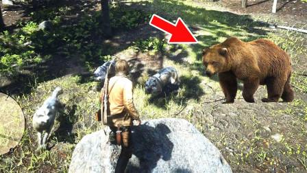 炮芯杀了狼崽子,结果遭到狼族复仇,还带来一只狗熊!