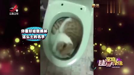 家庭幽默录像猫咪睡在马桶里最温暖的地方女主人崩溃了