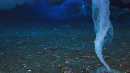 海底最强杀手被发现,没有生物是它的对手,人类见到也要绕道走
