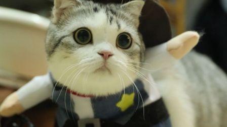 【泡芙的日常】这个小猫的圆圆脑袋圆得像加了特效