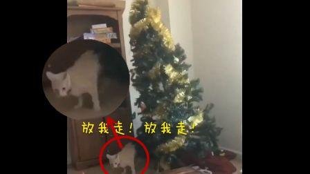 圣诞树保卫战!如何避免树上长猫?