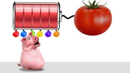 11.跟着小猪认识动物和五彩缤纷颜色