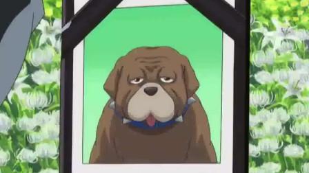 《银魂》山崎本以为是自己葬礼,没想到自己只是配角,狗才是主角