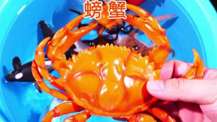 认识动物 学习海洋生物的名字锤头鲨螃蟹